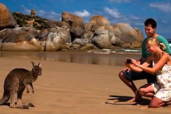 kangaroo-on-beach-at-wilsons-prom5C894AD3-A1C9-C042-C7CB-EA54874CEDB0.jpg