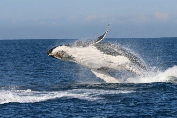 wildlife-coastal-cruises-whale-watchingAB4BFC0E-188A-AE8B-0B86-4E1455151F0E.jpg
