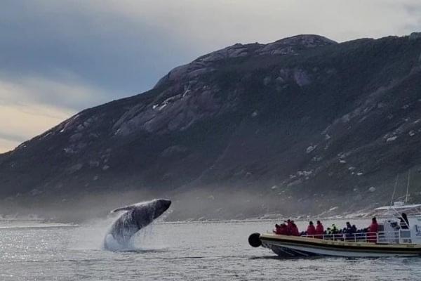 whale-at-wilsons-prom-june2021-prom-cruisesA7BB0D4B-4C76-5EC7-C503-54F97D241497.jpg