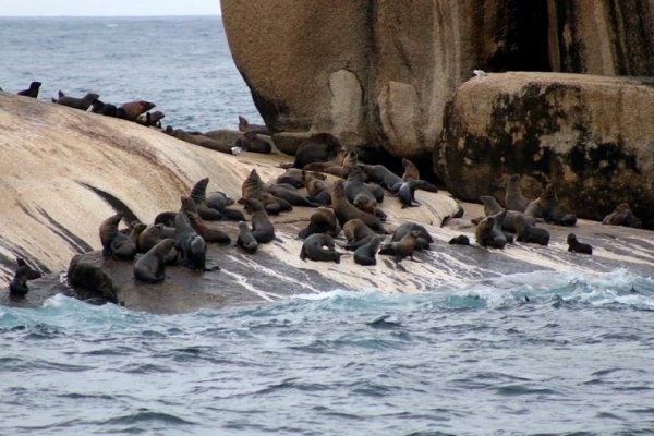 seals-on-wildlife-coastal-cruises-wilsons-prom-cruiseAE160FB9-5655-5657-6816-4CCE1CEE4EA8.jpg