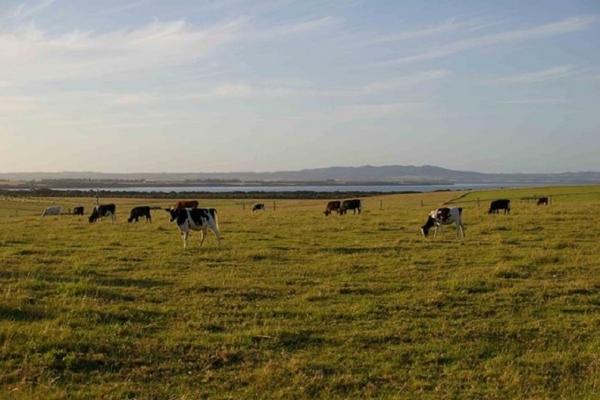 south-gippsland-cows7E0F6AC6-C618-B911-C466-4A83F5E80985.jpg
