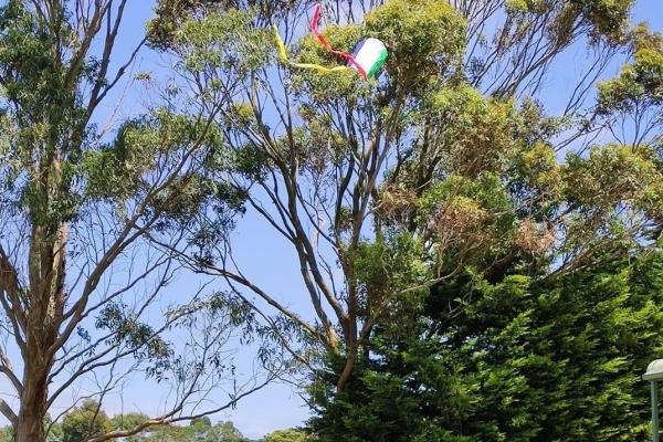 bev-gleeson-flying-kite-23-11-20A9CF9303-0ABE-28BB-5826-17D83BD44D1F.jpg